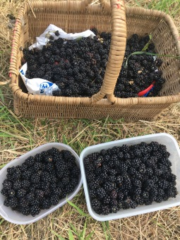 Blackberries anyone?